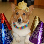 2011: The Daily Corgi Year in Review