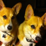 Mashu and Pino of Arizona