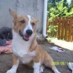 Jasper of Canada
