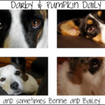Blue Ribbon Blogger:  Darby and Pumpkin Daily!