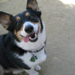 flickr fun:  The Daily Corgi's galleries!