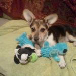 Wednesday Adoptables Update: Charlie!