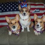 Go Team USA — Corgi Style!