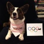 Need more Olympic Corgi?