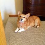 Wednesday Adoptables Update:  Pippa!