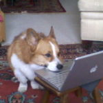 Does your dog read The Daily Corgi?