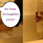 Big CorgiPals Auction!