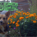 Thank you CorgiPals!