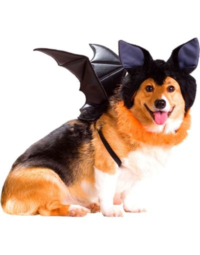 Howl-O-Ween Costume Contest: Same Bat Channel, Different Bat Day …
