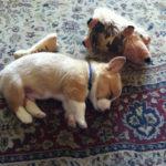 Puppy Cam: Calhoun!