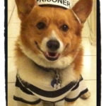 Call for Entries: 2012 Daily Corgi Howl-O-Ween Costume Contest!