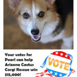 Votes for Pearl To Help Rescue Corgis!
