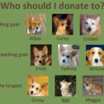 Catching Up with CorgiPals: Updates Galore