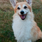 Catching Up with CorgiPals: Special Edition