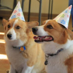 Happy Birthday Cabo and Luna!