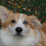 Catching Up with CorgiPals: New Dogs and Safety Blogs