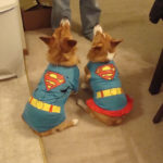 Nine Fun and Easy Ways To Be A Superhero For Corgis In Need!