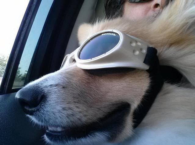Ed: Hot-Doggler!