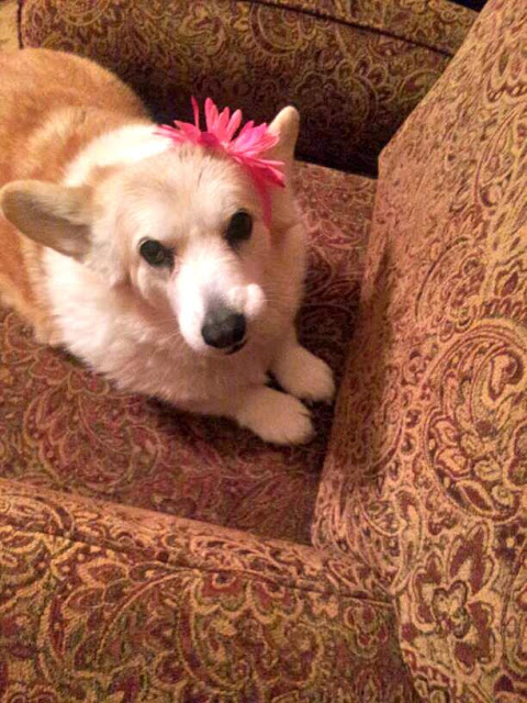 Senior Smiler: Miss Dani!
