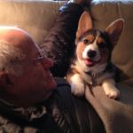 Real Men Love Corgis: Beau!