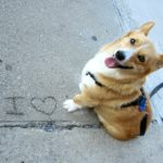 A Very Corgi Valentine's Day!