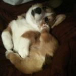 Puppy Cam: Max!