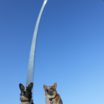Traveling Corgipants: Porter and Dally Arrive at Nationals!