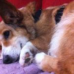 Thursday Adoptables Update: Tilly!