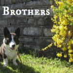 Blue Ribbon Blogger: The Brews Brothers