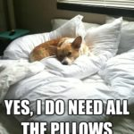 Good Night Corgi Nation