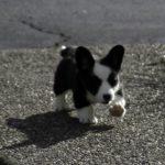 Puppy Cam: Bold Little Branwyn!