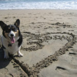 Catching Up with CorgiPals: Playing Catch Up