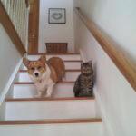 Best Buddies: Bentley and Owen