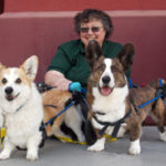 Thursday on the Blog: Bobbie Mayer, Author of Corgis on Wheels