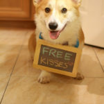 Free Corgi Kisses!