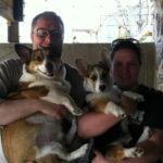 Thursday Adoptable Update: Big Dog on Campus Lambert!