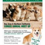 Bay Area & Northern California Corgi Meet Up on June 22nd!