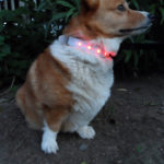 Pup Protector: Light Up The Night and Pin To Win!