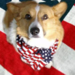It's OFFICIAL! Tucker The Corgi Master Raises $10,000!
