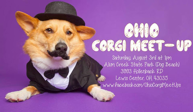 Ohio Corgi Meet-Up THIS Saturday August 3rd!