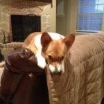 Dixie, Aggie, Hopper and Madison: The Texas Fab Four!