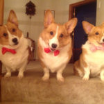 It's Bow Tie Tuesday!