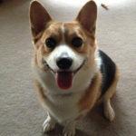 Saturday Smiler: Daisy!