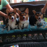 Saturday Smilers: Eli, Bentley and Milo!