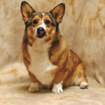 Benny Corgipants: In His Mom's Own Words