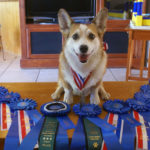 Gator: Twelve Years Old and Rocking Agility!