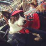 Bark In The Park: Norman At The Braves' Turner Field!