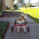 The Daily Corgi: (Not) Lost In Translation
