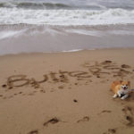 Butters Claims the Beach. No (other) Dogs Allowed!