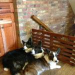 Cardi-licious: Ella, Lincoln and Olathea!